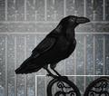 Raven2014
