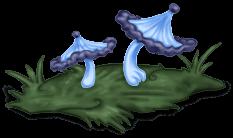 Mushroom Grass Enchanted Forest