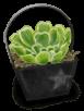 Small Garden Plant