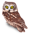 Halloween Owls 2018