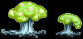 Cromirland mushrooms