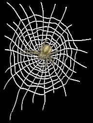 Canvas and Spider Prison