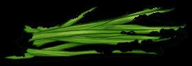 Soft herb