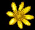 Big Flower