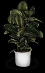 Plant Back