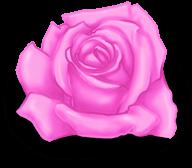 Big Rose Valentine's Day
