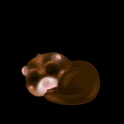 Adopt a Chocolate Ferret