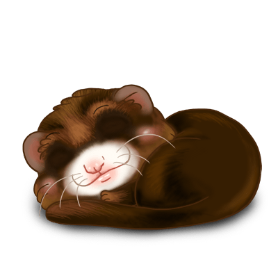Adopt a Chocolate Ferret
