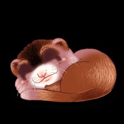 Adopt a Cromimi Ferret