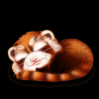 Adopt a Red panda Ferret