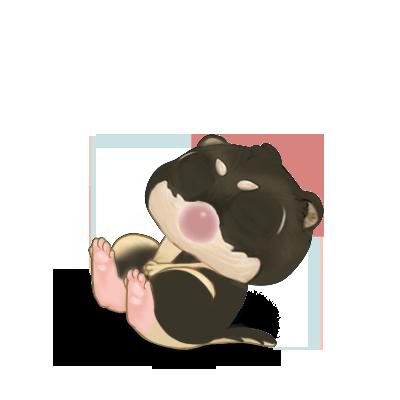 Adopt a Shiba Inu Ferret