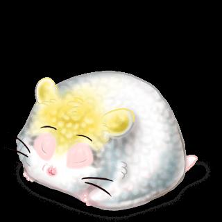 Adopt a Cockatoo Hamster