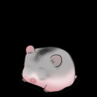 Adopt a China Hamster