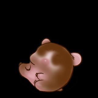 Adopt a Milk chocolate Hamster