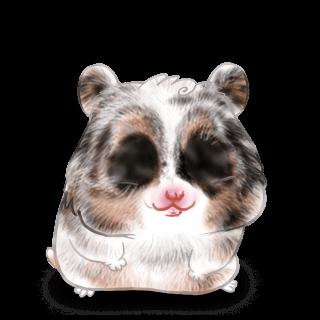 Iona Hamster