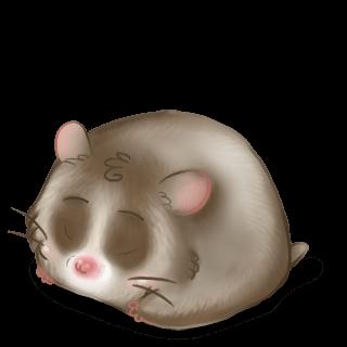 Adopt a Praline Hamster