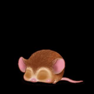 Adopt a Golden beige Mouse