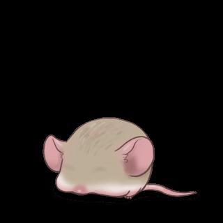 Adopt a Gray Mouse