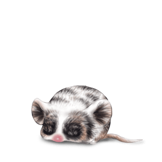 Adopt a Classical Mouse