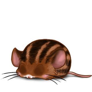 Adopt a Brown striped Mouse