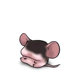 Adopt a Black Mouse
