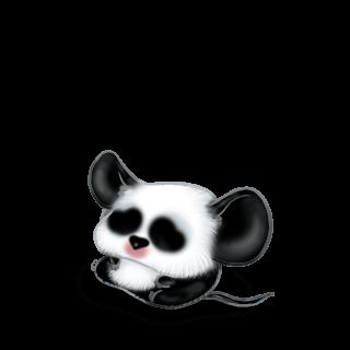 Adopt a Mandou Mouse