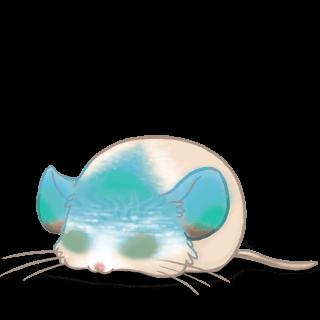 Adopt a Beach Mouse