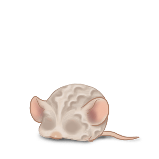 Sable Mouse