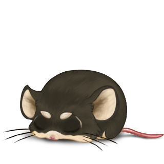 Adopt a Fire Mouse