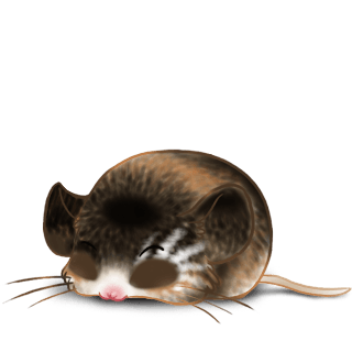 Adopt a Surprise Mouse