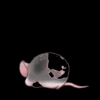 Adopt a Angora apricot Mouse