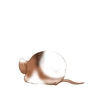 Adopt a Silver Mouse