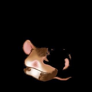 Adopt a White Mouse