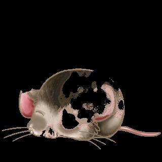 Adopt a Albino Mouse