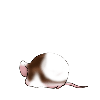 Adopt a Beige Mouse