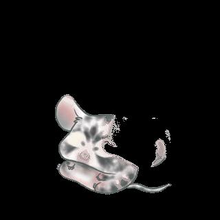 Adopt a Albino cream Mouse