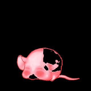 Abricot classique Mouse