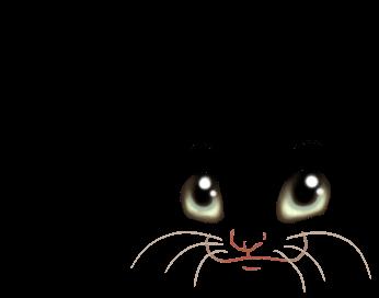 Scratch Ferret