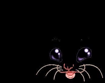 Irisor Ferret